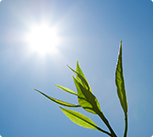 Sun Exposure Can Cause Brown Spots