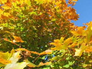 brilliant colors in fall